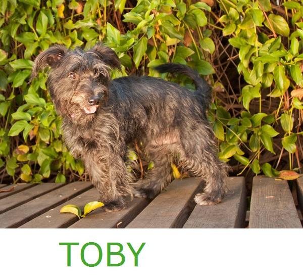 © Fetchlight, Scottish-Terrier-Mix, dog-portraits