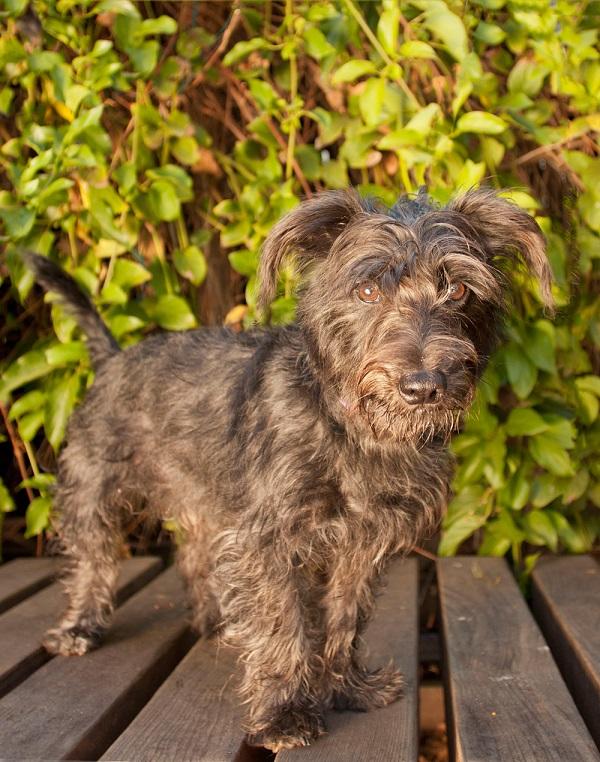 Dog Rescue Homes Scotland