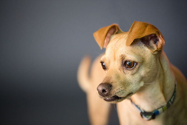 © Nicole Begley Photography, food-for-fido- Pittsburgh-dog-photographer
