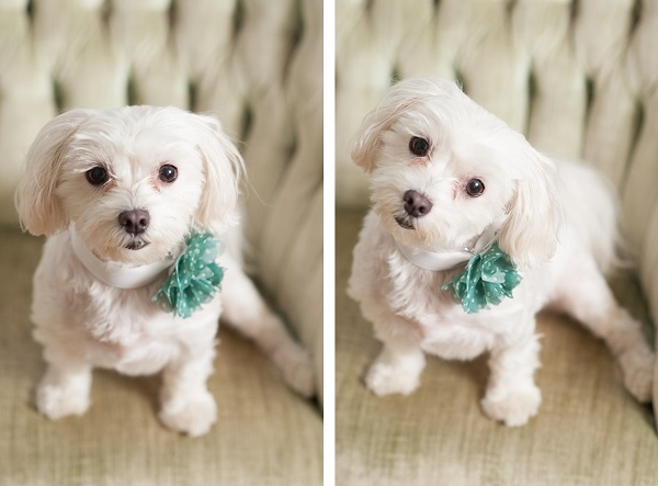 © Alice G Patterson Photography, Lifestyle-Dog-Photography