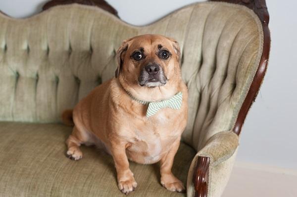 © Alice G Patterson Photography, Syracuse Dog Photographer