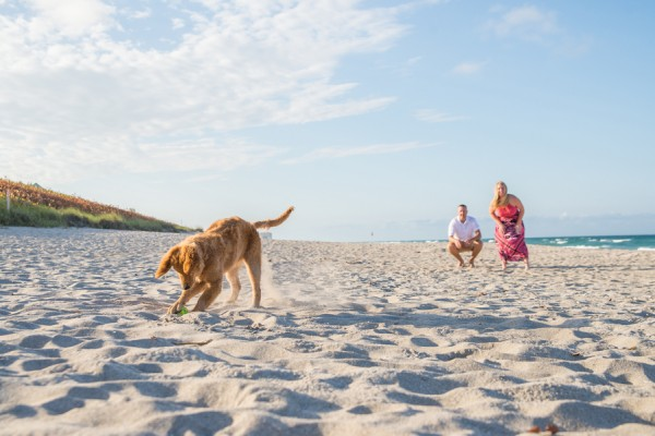 © Enduring Impressions Photography, Golden Retriever-digging-in-sand
