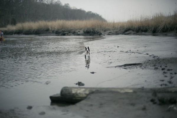 © Sarafina Photographs, Boston-Terrier-running-on-muddy-bank