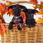 © Stacey Gammon Pet Photography, adopt-puppies-Animal-Rescue-R-Us