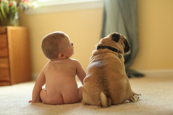 © Photographs by Megan, baby-and-Pug