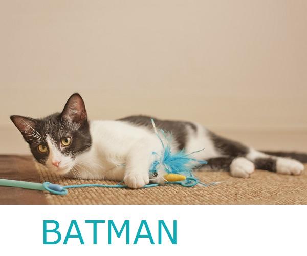 © Fetchlight Photography, Adoptable-Kitten-from-Coronado-CARES