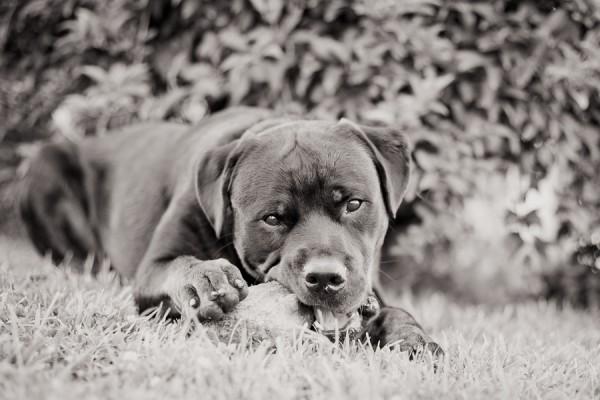 © Custom Portraits by Charlene, Pittsburgh- Pet-Photographer