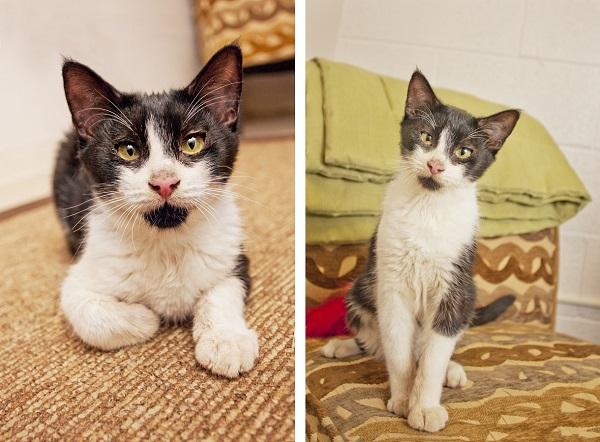 © Fetchlight Photography, Adoptable-Kitten-Coronado CARES