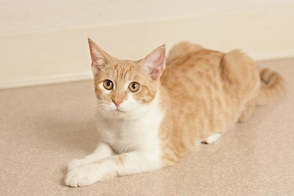 © Fetchlight Photography, Adoptable-kitten-CoronadoCARES