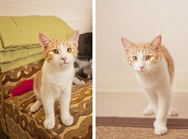 © Fetchlight Photography, Adoptable-Kitten-Coronado-CARES