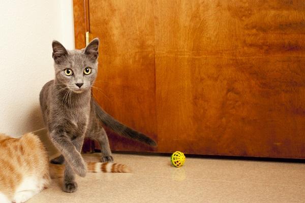 © Fetchlight Photography, Adoptable-Kittens-Coronado-CARES