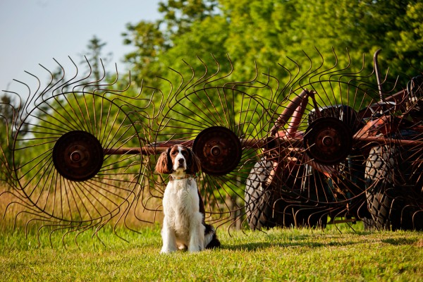 © Kathryn Schauer Photography, Lifestyle-Pet-Photography