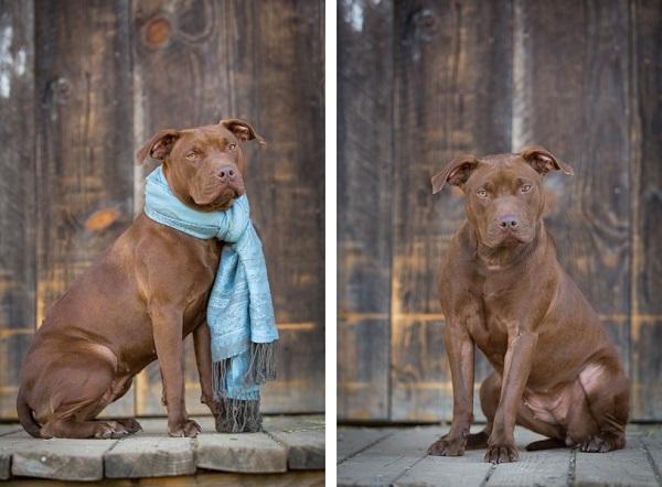 © Lisa Van Dyke Photography, Adoptable-Dog-HartSong-Ranch