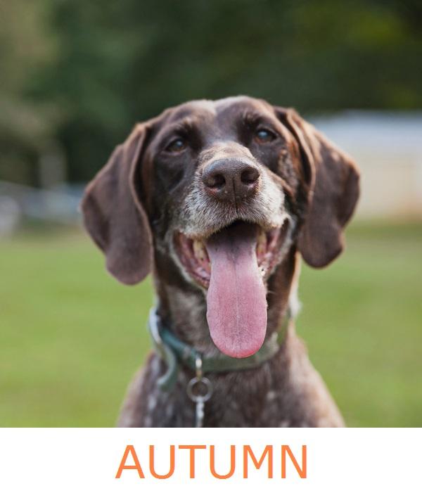 Illinois Shorthair Rescue:  Autumn & Rusty