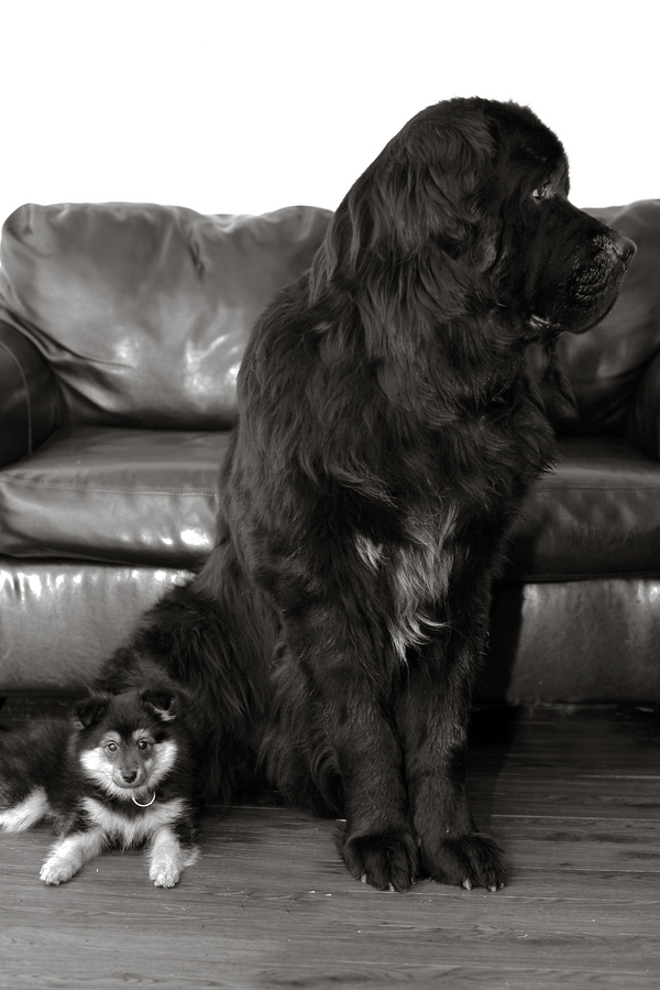 © Shanna Duffy Photography, handsome-dogs