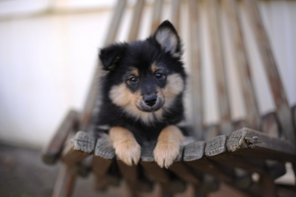 © Shanna Duffy Photography, small-mixed-breed-on-chair
