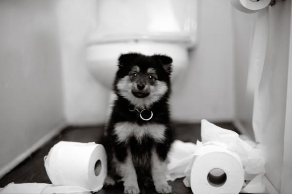 © Shanna Duffy Photography, puppy-love