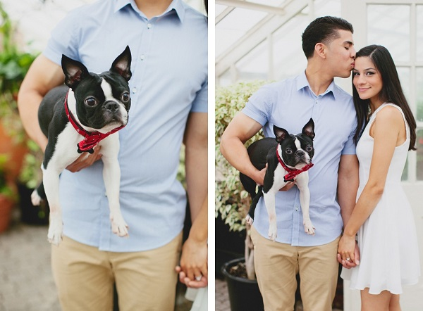 © Tiffany Tcheng Photography, handsome-Boston Terrier