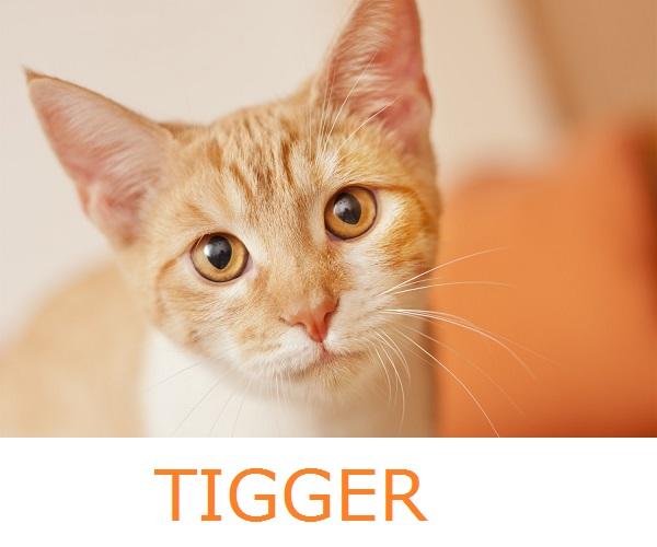 © Fetchlight Photography, adopt  Tigger from Coronada CARES