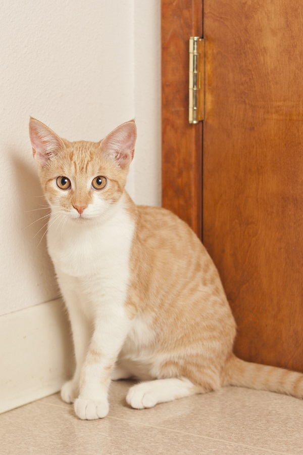 © Fetchlight Photography, Adoptable-kitten