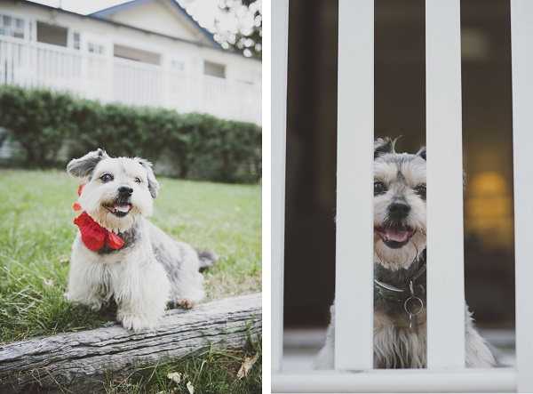 © Willow & Co, senior-Schnauzer-Terrier-mix