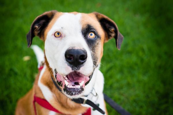 Adopt Me:  Max!