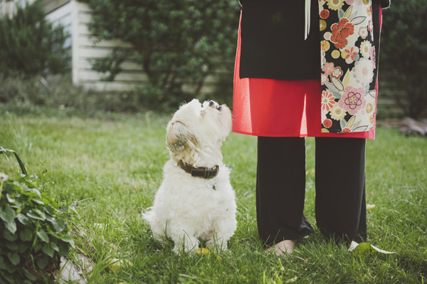 Willow & Co, Blue-Mountain-Photographers, Maltese-Mixed-Breed