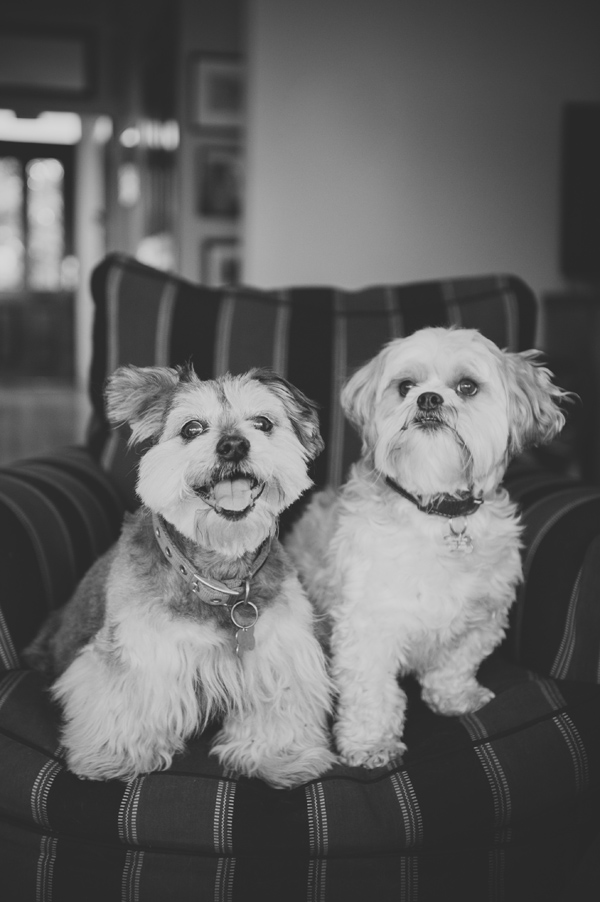 © Willow & Co, Dogs-on-furniture, best-buddies