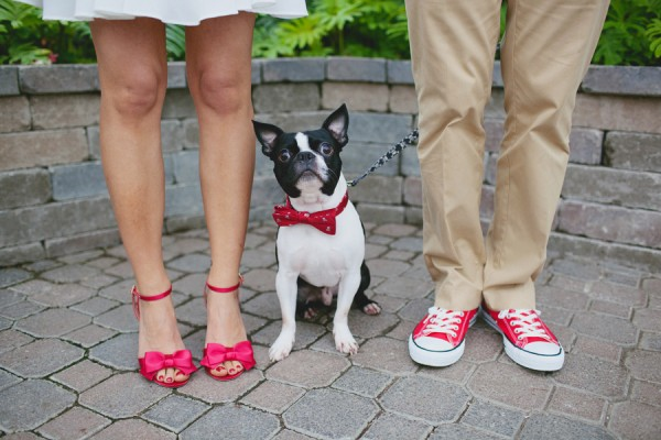 © Tiffany Tcheng Photography, Boston-Terrier-in-Bow-Tie |Daily Dog Tag
