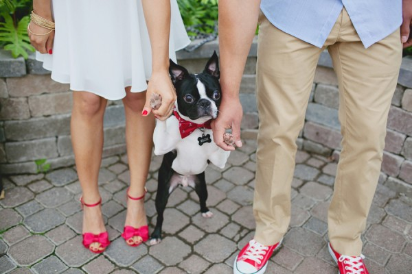 © Tiffany Tcheng Photography, Engagement-photos-with-Boston-Terrier  | Daily Dog Tag
