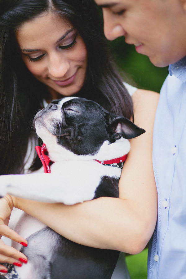 © Tiffany Tcheng Photography, Happy-Boston-Terrier
