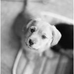 Happy-New-Year-Puppy