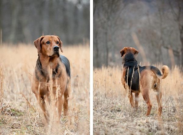 © Custom Portraits by Charlene, Pittsburgh-area-pet-photographer