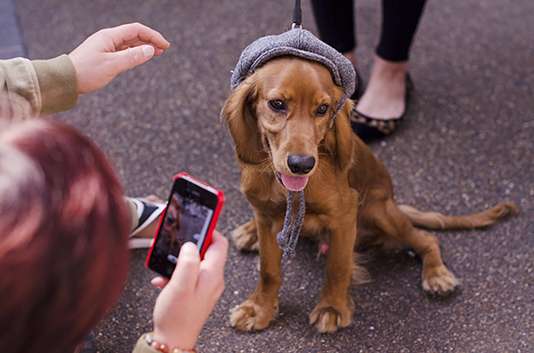 © The London Phodographer, dog-fashion
