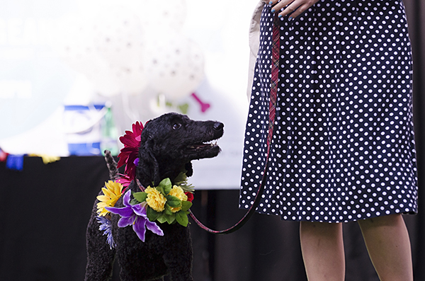 © Amber Allen, The London Phodographer, floral-wreath-for-dog, London-Paw-Pageant