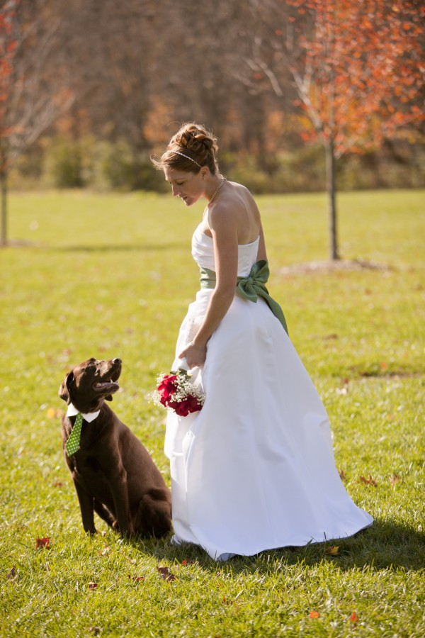 ©Erika Brown Photography, |Daily Dog Tag, bride and Chocolate-Labrador-Ringbearer