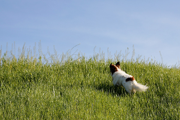 © Katherine Carver Photography, Papillon-in-tall-grass