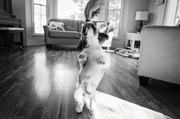 © Kaye Ness Photography, modern-pet-photography