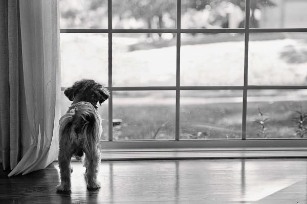 © Kaye Ness Photography, Lifestyle-dog-portraits