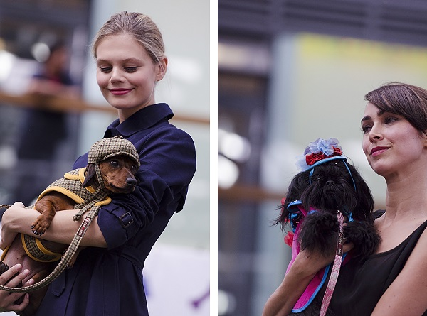 © Amber Allen , The London Phodographer| Daily Dog Tag | London-Paws-Pageant, Fashion-Hounds