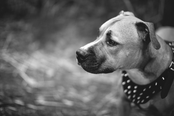 © Adam Cavanagh Photography, handsome-dog