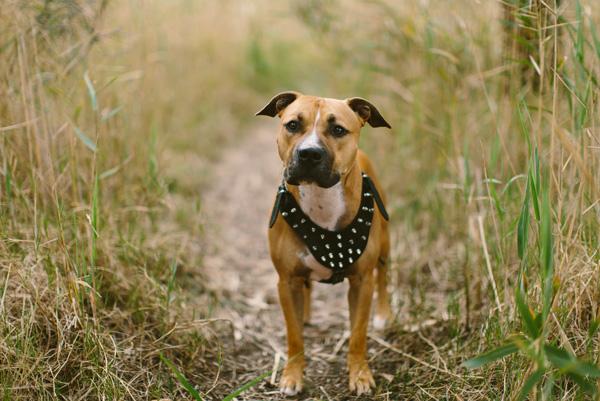 © Adam Cavanagh Photography, handsome-dog-portraits