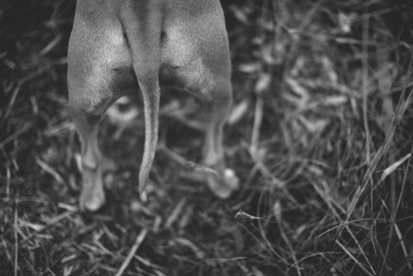 © Adam Cavanagh Photography, dog-portraits