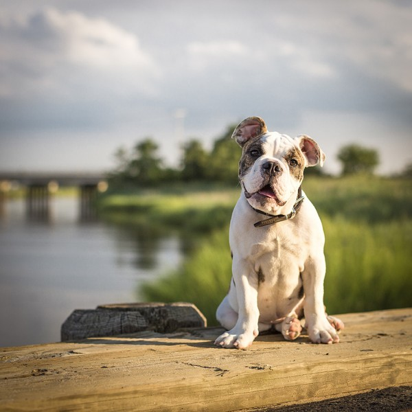 © Good Doggy Photography, Creative-Dog-Photographer