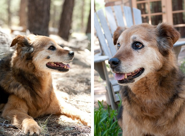 © Tangled Lilac Photography, handsome-senior-dog