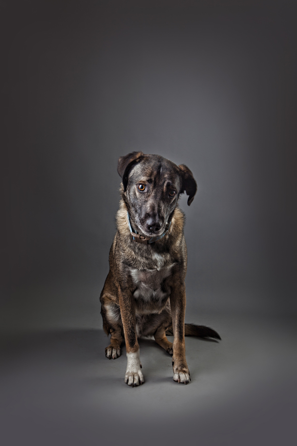 © Stephanie Millner Photography, Lovemutts