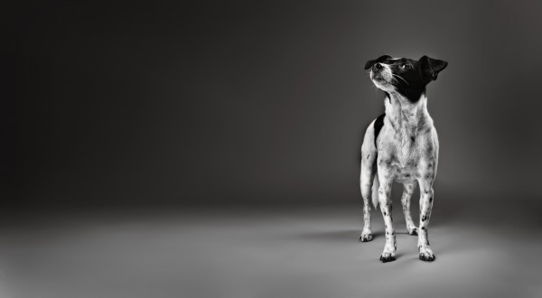 © Stephanie Millner Photography, creative-dog-portraits