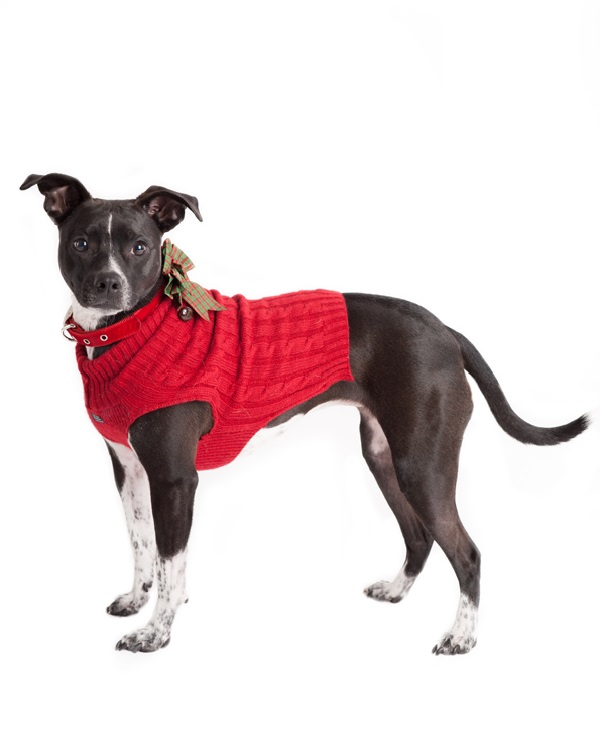 © Alice G Patterson Photography, Mixed-breed-dog-wearing-holiday-sweater
