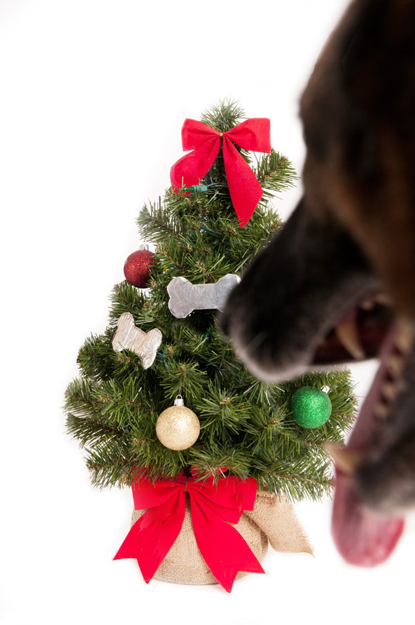 © Alice G Patterson Photography, German-Shepherd-and-Christmas-tree