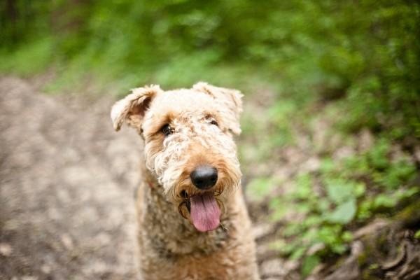 © Custom Portraits by Charlene, western- Pennsylvania-Dog-Photography